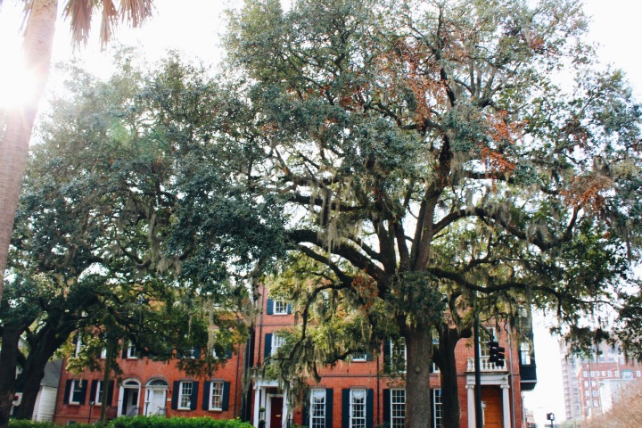 Savannah, GA Travel Diary